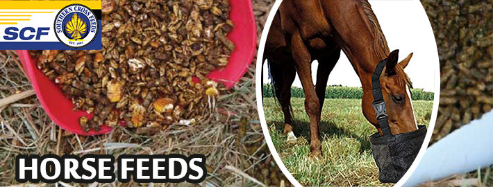 Market for Horse Feeds