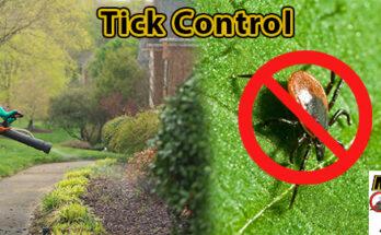 Easton MA Mosquito Control