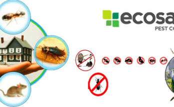 Melbourne Pest Control